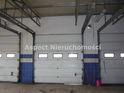 Local Comercial para Alquilar  Kutno                                      | 1000 mkw