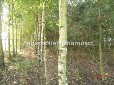 Parcela para Alquilar  Nowe Ostrowy                                      | 20100 mkw
