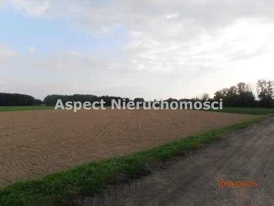 Lots for Sale  Skierniewice                                      | 74900 mkw